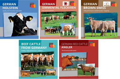 Cattle Export Brochures